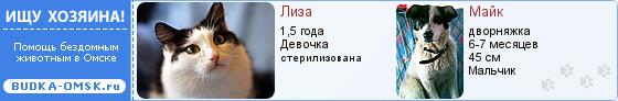 pets2_blue2.jpg
